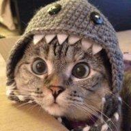 -Kitty- Mr.Kitty